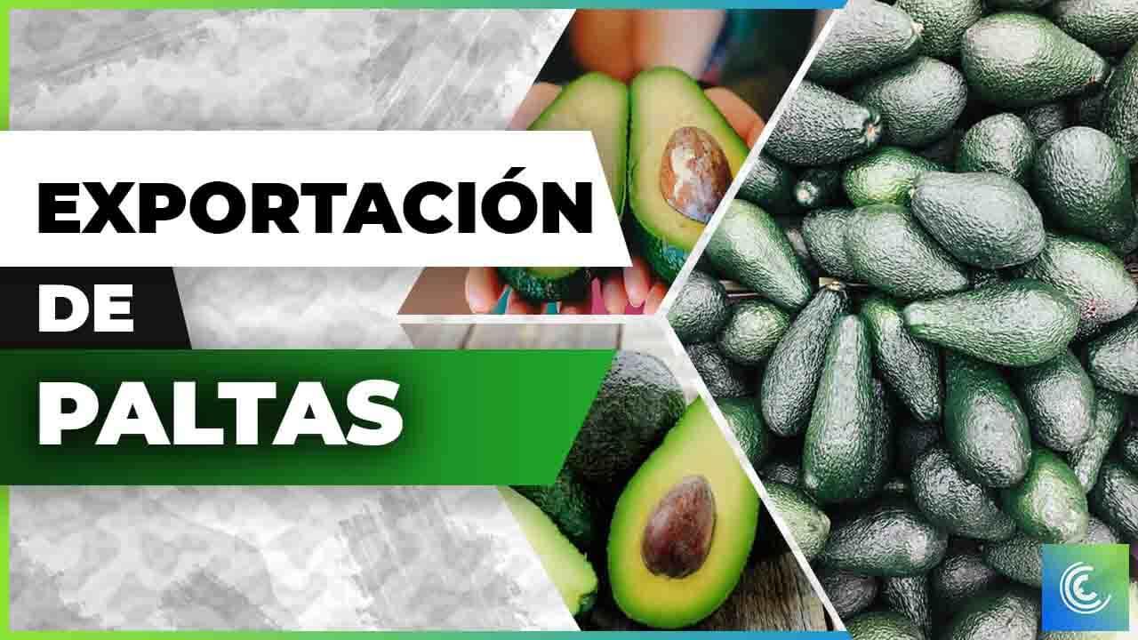 Exportación de avocados